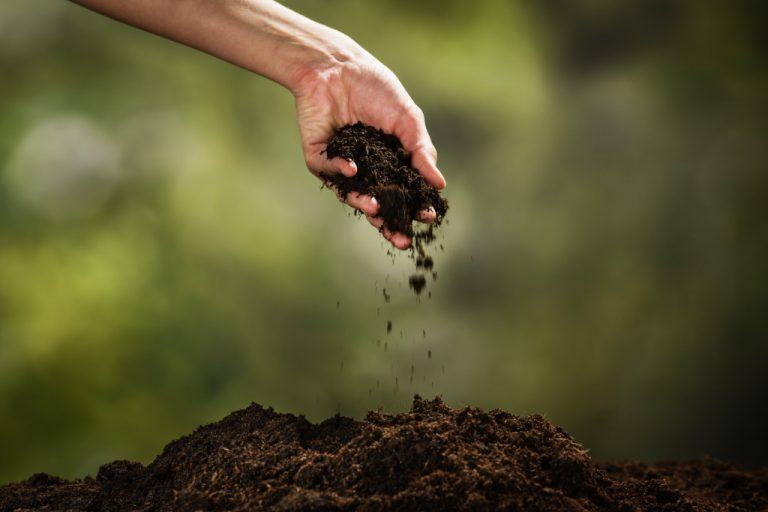 checking soil